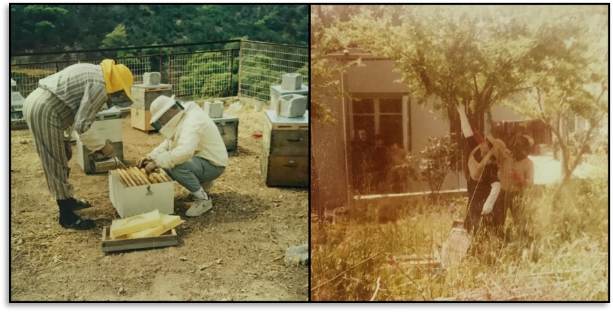Anastasia and Eleftherios Pantelakis, the children of Emmanuel, engaging in beekeeping with their father. The name ANEL comes from the initial two letters of their names.
