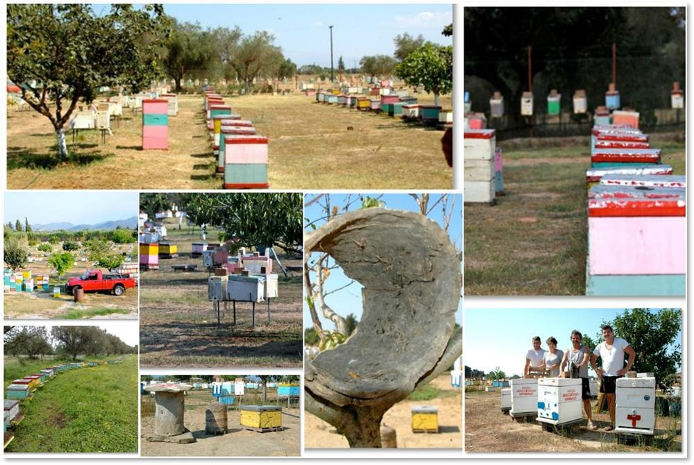 Pollen collection program: 1800 hives 20tns/annually