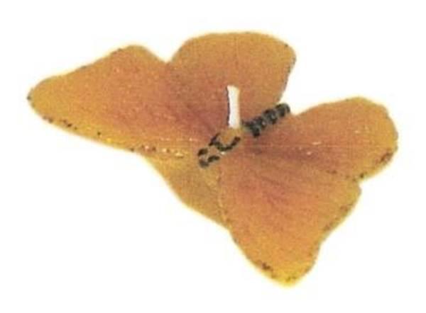Καλούπι πεταλούδα