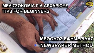How to unite two beehives with the Newspaper Me...