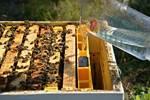 Image sur Cabochon pour Nourisseur avec Flotteurs 4 kg ANEL Dadant US/ES