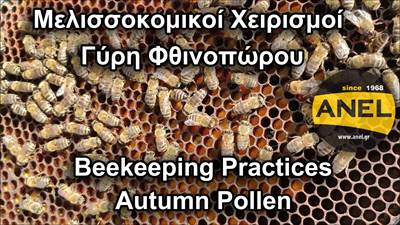 Beehive inspection for pollen in autumn